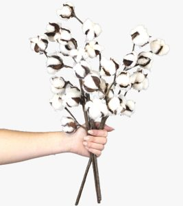 "Cotton Stems - 3 Stems Pack - 10 Cotton Buds Stem - 20"" Tall - Farmhouse Style Floral Display Filler - Rustic Wedding Centerpiece"